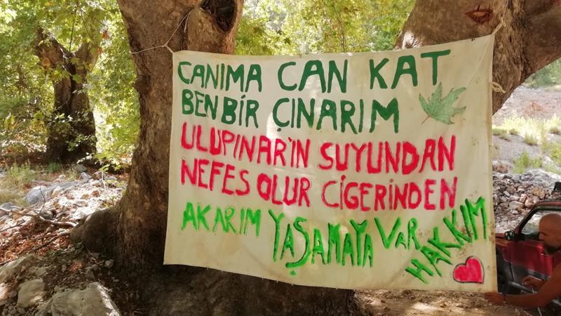 200 Yıllık Çınarların Önünde Nöbet Başlattılar: 'Yol İçin Ağaçlar Katledilmesin!'