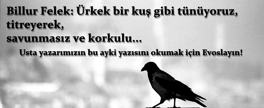 Usta Yazarımız Billur Felek'in Dilinden; Kardeşlik Ve Sevginin Gücü...