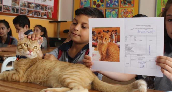 Fenomen kedi Tombinin dersleri Pekiyi