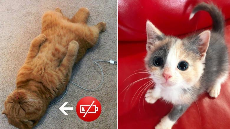 Kedilerin, Sevimlilik Konusunda Bir Numara Olduklarını Kanıtlayan 10 Fotoğraf