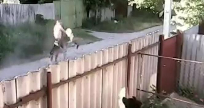 Pitbullar adama böyle saldırdı