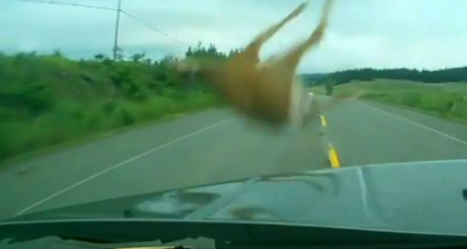 Otomobil aniden yola fırlayan geyiğe çarptı