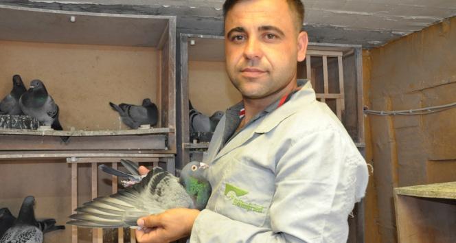 Mesafe tanımayan güvercin sahibine kupa kazandırdı
