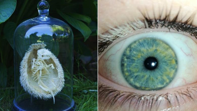 Sıradan Şeylere Bambaşka Bir Açıdan Bakmanızı Sağlayacak 9 İlginç Fotoğraf