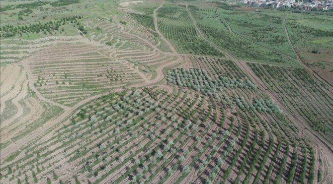 Mimarlar Odası: 'Atatürk Orman Çiftliği Arazisinden 1 Milyon Metrekare Daha İmara Açıldı'