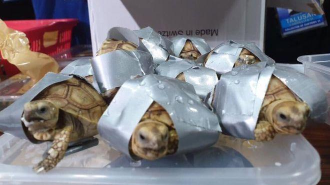 Zalimliği Gözler Önüne Seren Fotoğraf: Koli Bantlarıyla Sarılmış 1.500 Kaplumbağa Bulundu