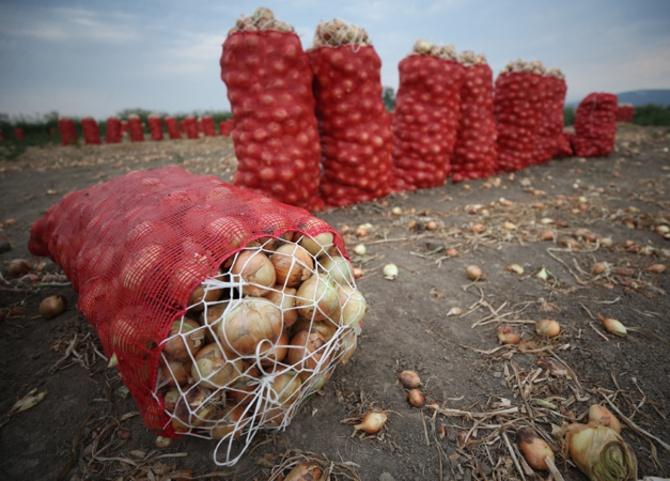 Fiyatlar İçin Erdoğan'dan Yeni Kararname: Kuru Soğan İthalatında 'Sıfır Gümrük Vergisi' Uygulaması Uzatıldı