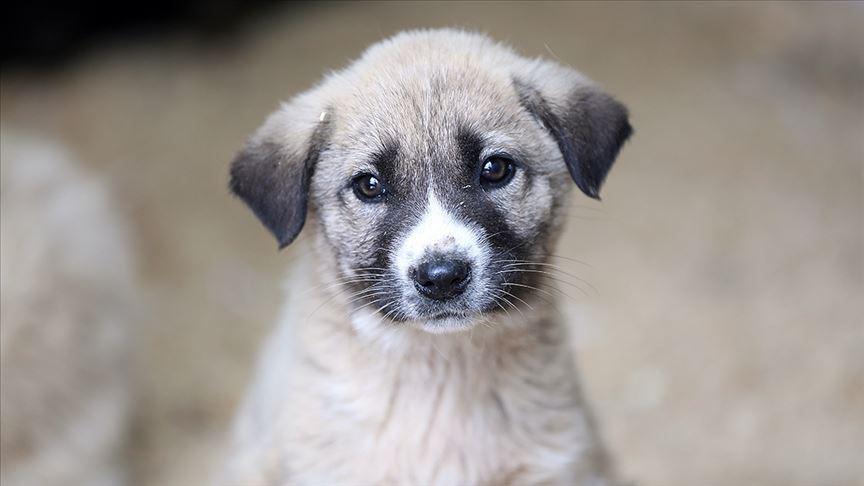 İyi ki Hayatımızdalar: Sosyal Medyadan 4 Nisan Dünya Sokak Hayvanları Günü Mesajları