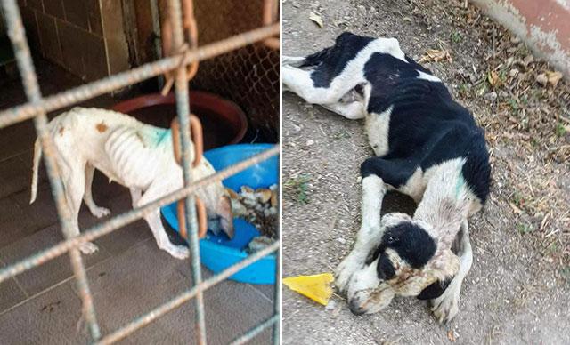 'Açlıktan Taş Kesilip Öldüklerini Gördüm' Tire'deki Hayvan Barınağının İçler Acısı Hali Tepki Çekiyor