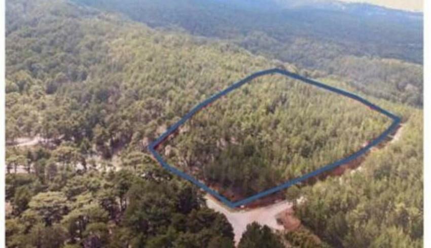 Ağacı Kes, Bedelini Öde: Yanmayan Ormanları da Otel İçin Kesecekler