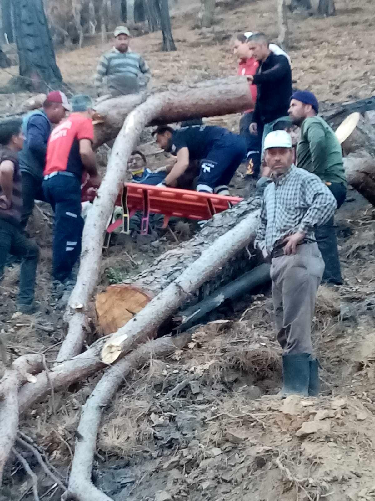Ağacın altında kalan işçi ağır yaralandı