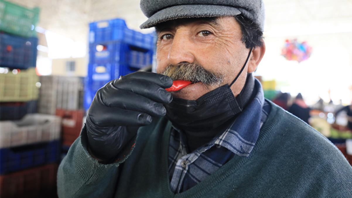 Antalya'da yetiştirilen Şili biberi isota rakip oldu