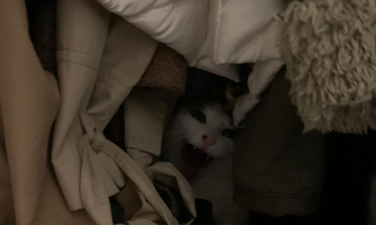 Araştırma: Salgında Sahipleri Eve Kapanan Kediler Bezdi...