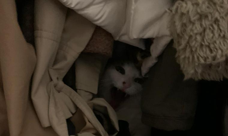 Araştırma: Salgında Sahipleri Eve Kapanan Kediler Bezdiler...