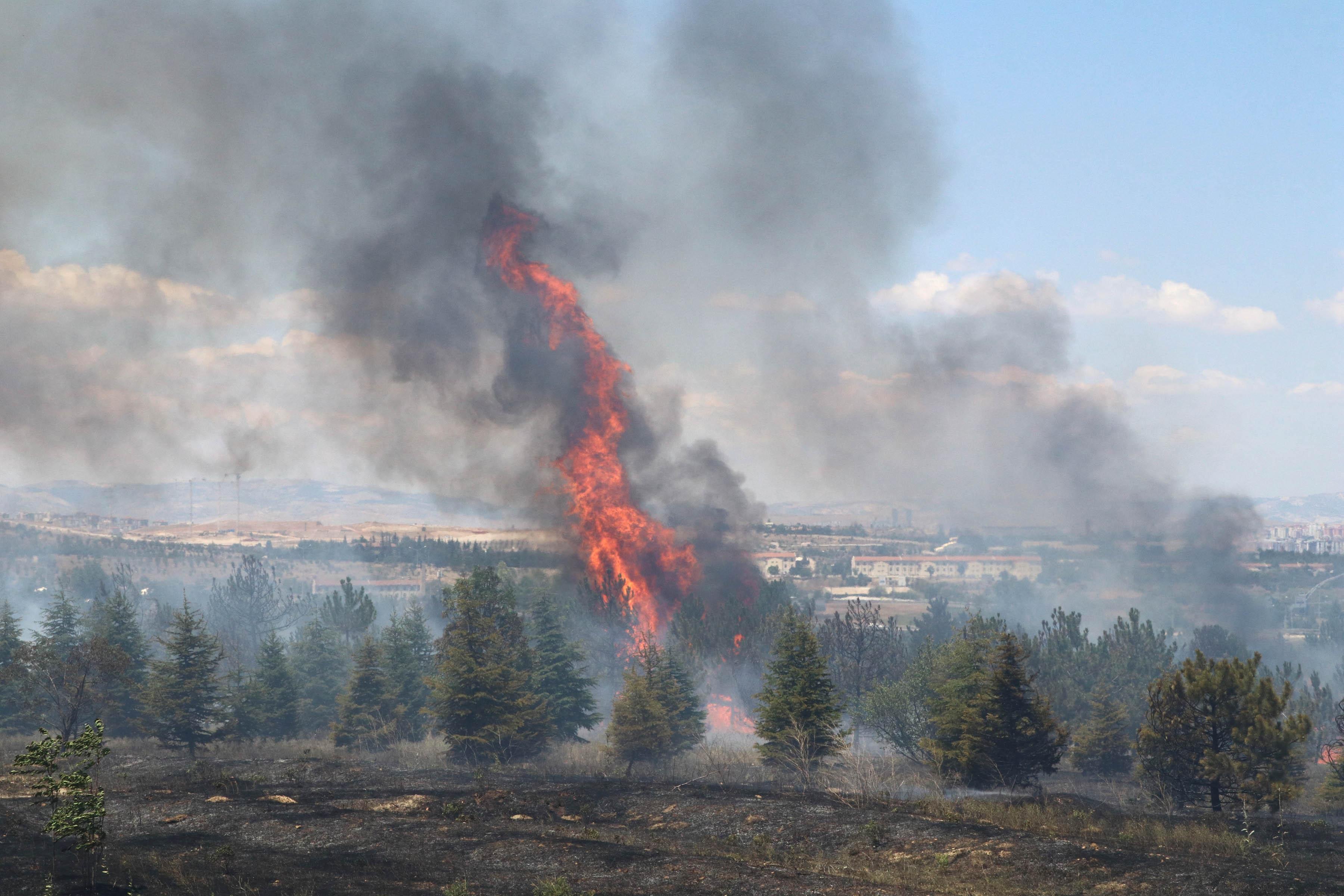 Atatürk Orman Çiftliği Arazisinde Yangın: 1 Kişi Gözaltında