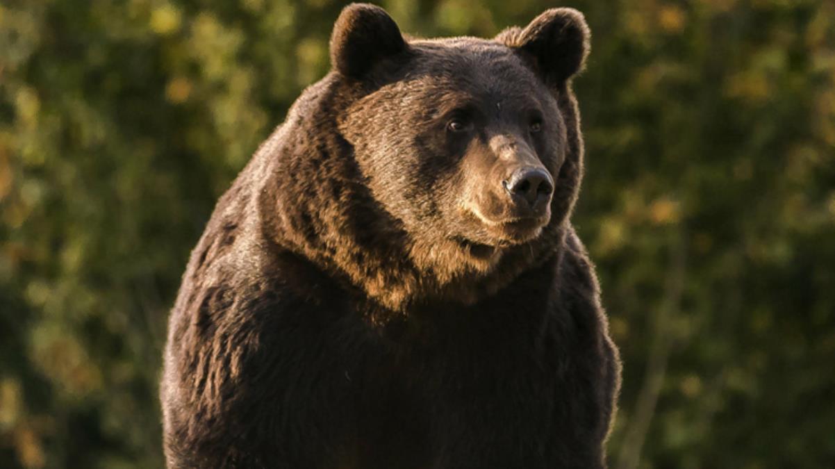 Avrupa Birliği'nin en büyük ayısını vuran Liechtenstein Prensi zor durumda! Aktivistler peşini bırakmıyor