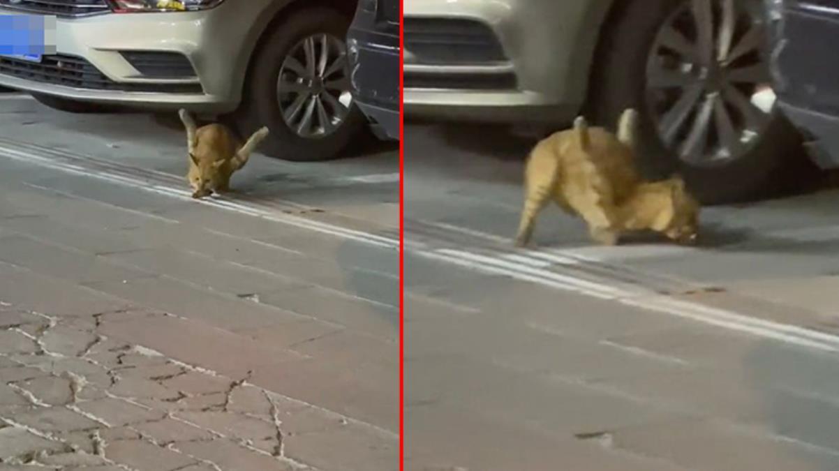 Bacakları ters kediyi görenler görenler gözlerine inanamıyor Tecavüze uğrayınca ön ayakları havada kaldı
