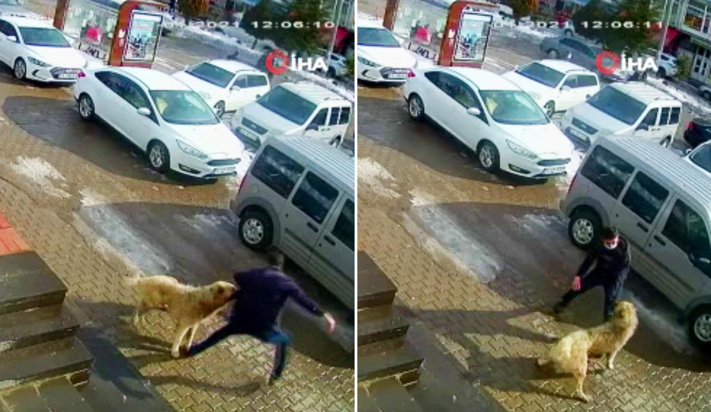 Bitlis'te Kendisine Saldıran Köpeği Yumruklayarak Uzaklaştıran Adam