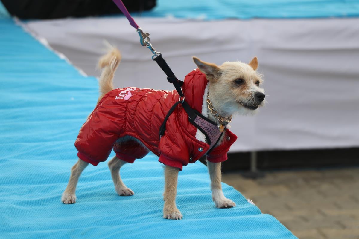 Edirne'de kedi ve köpek güzellik yarışması düzenlendi