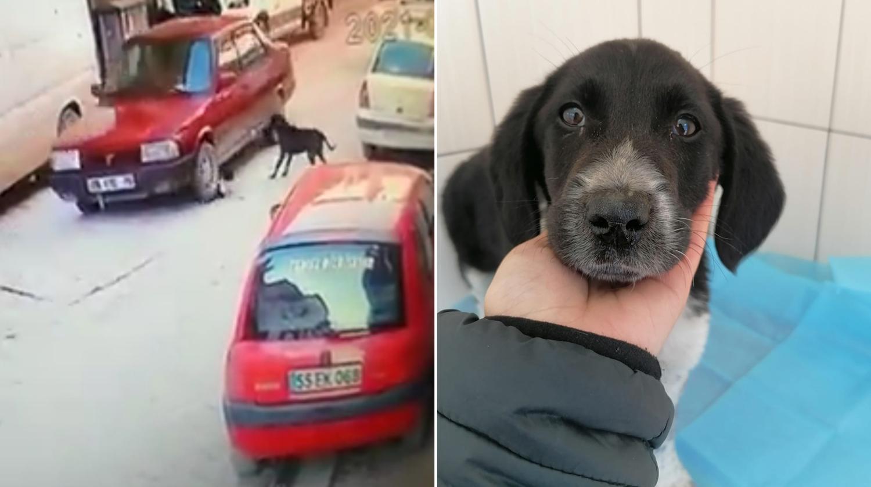 Emekli Polisin Aracıyla Ezdiği Yavru Köpeği Esnaf Kurtardı: 'Vicdanım Bırakmaya Elvermedi'
