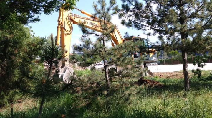 Eskişehir'de Lise Bahçesindeki Ağaçlar Düğün Salonu İçin Kesildi