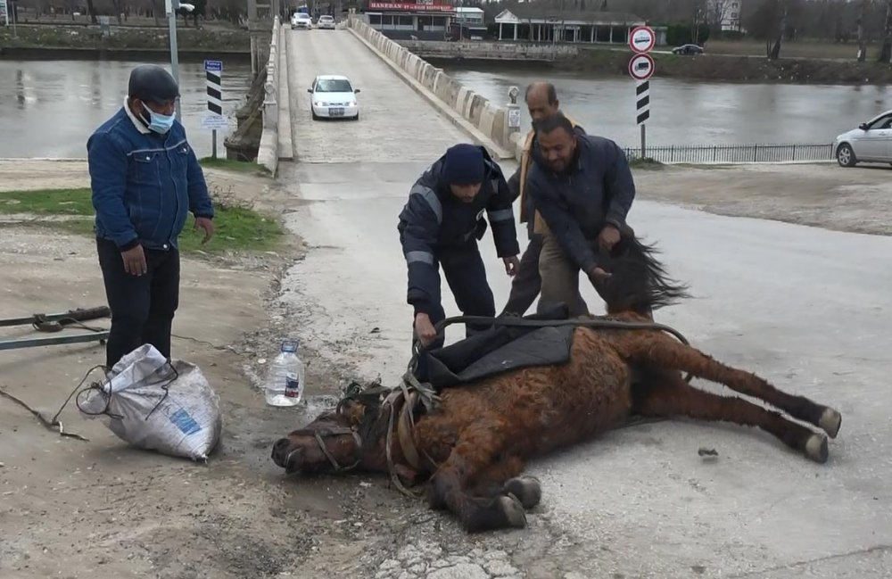Eziyetin Böylesi! Aşırı Yükten Yere Yığılan Atı, Kuyruğundan Çekerek Ayağa Kaldırdılar