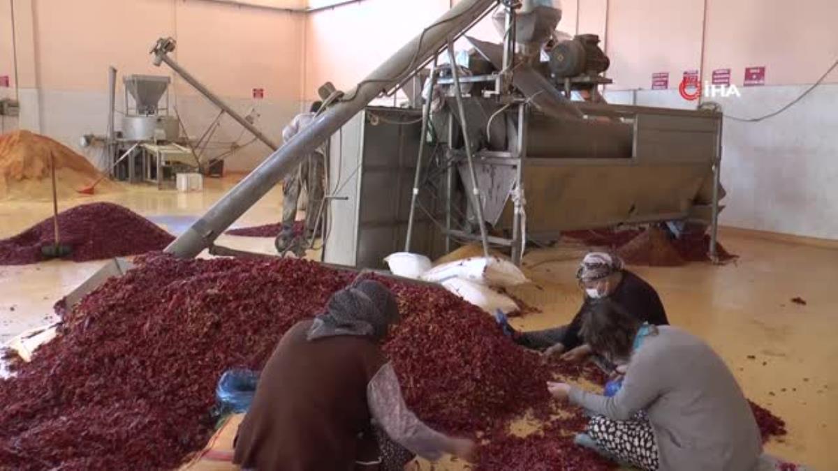 Gaziantep'te üretilen pul biberler Avrupa, İngiltere ve ABD'ye ihraç ediliyor
