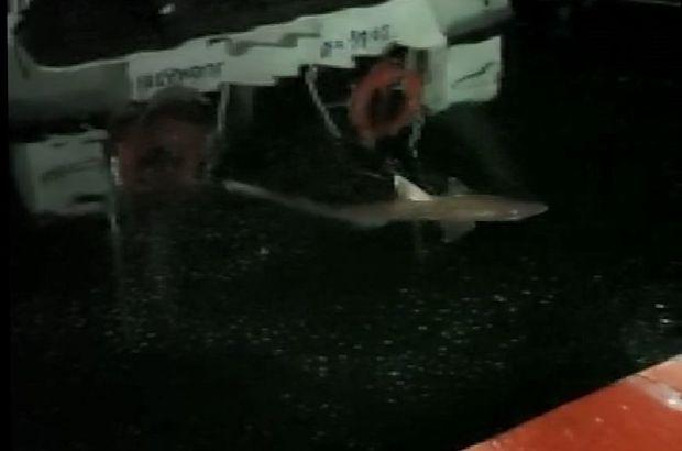 Haliç'te Bir Vatandaşın Oltasına Köpek Balığı Takıldı!