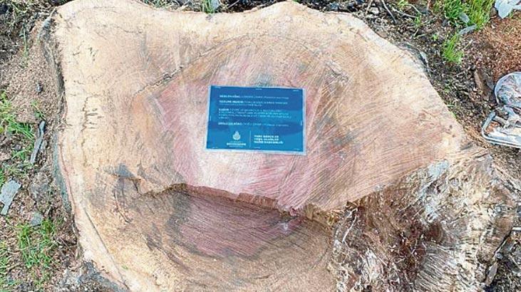 İBB'den Kesilen Ağaçlar İçin Bilgilendirme Kartı Uygulaması