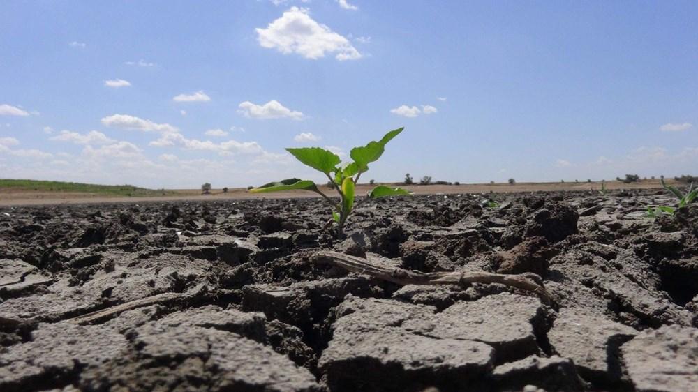 İklim Değişikliği: Trakya'da Son 91 Yılın En Kurak Dönemi Yaşanıyor