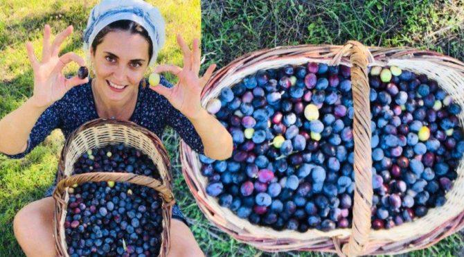 İstanbul'dan kaçıp Ege'ye yerleşmişti… Aslıhan Gürbüz zeytin hasadına başladı
