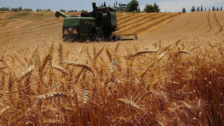 Karar Resmi Gazete'de: Buğdayda Gümrük Vergisi Sıfırlandı