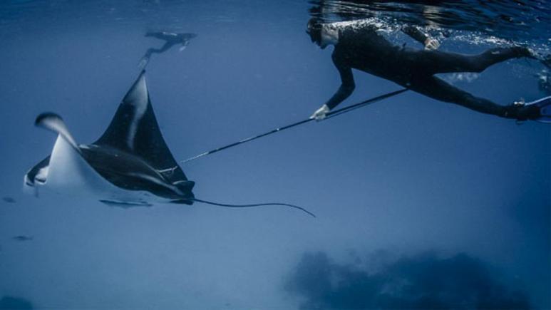 Kırmızı Liste Güncellendi: Köpek Balığı ve Vatoz Nesli Tükenme Tehlikesi ile Karşı Karşıya