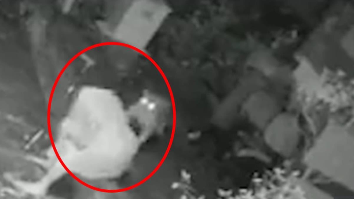 Korkunç görüntüler Evinin önünde oturan kadın, leopar saldırısına uğradı