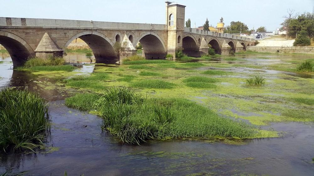 Kuraklık Nedeniyle Tunca Nehri Yeşile Büründü