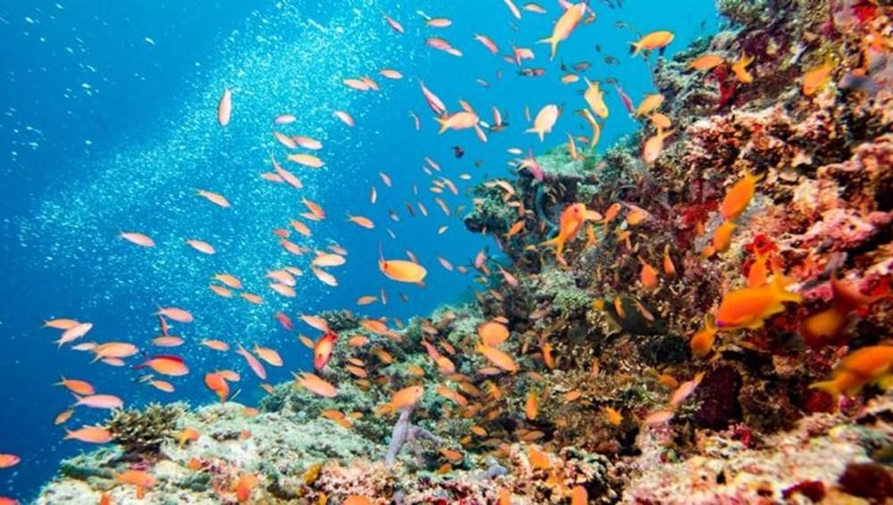 Küresel Isınma ile Mücadelede Yeni Umut: Endonezya'da 40 Bin Metrekarelik Mercan Resifi Hayata Döndürüldü