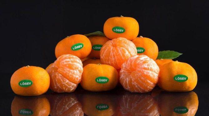 LÖSEV ilaçlı meyveye savaş açtı