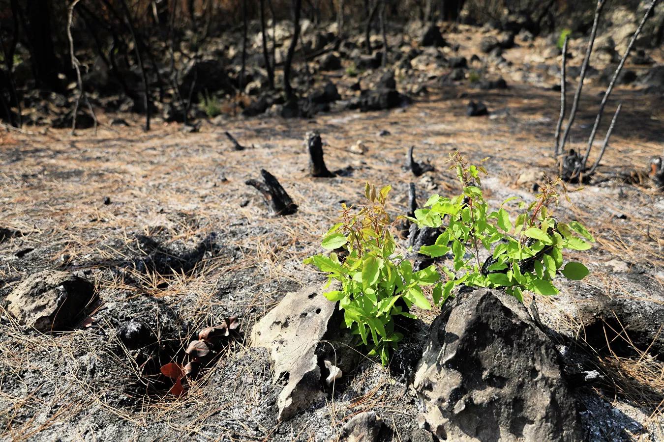 Manavgat'ta 10 Gün Süren Yangından Sonra Biraz da Olsa Sevindiren Haber: 20 Metrekarede 7 Bitki Türü Yeşerdi