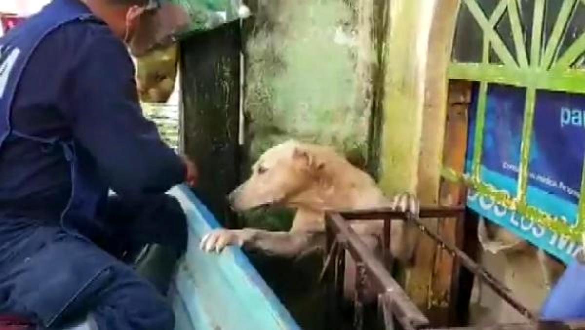 Meksika'da selden kurtarılan köpeğin görüntüleri viral oldu