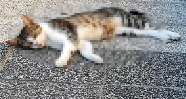 Mersin'de 15 Kedi Zehirlenerek Öldürüldü...