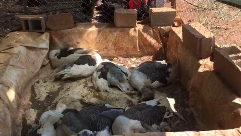 Resmen Cinayet! Göstermelik Çiftlikle Kredi Çekip Hayvanları Ölüme Terk Etti