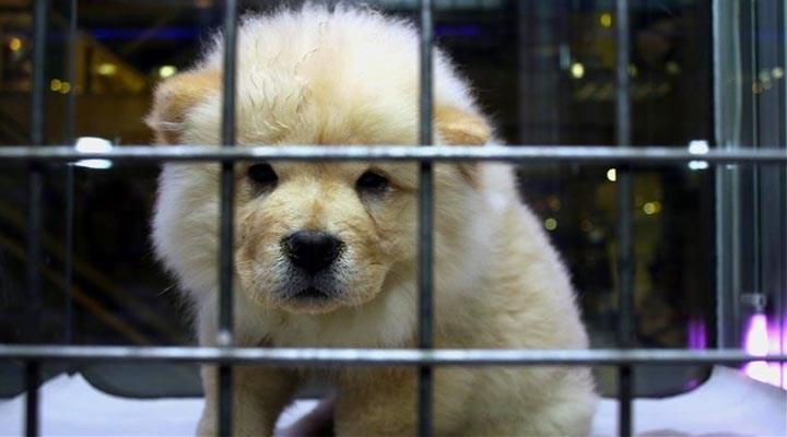 Rize'nin İkizdere İlçesinde Evcil Hayvan Satışı Yasaklandı: 'Bunlar Candır, Sahip Çıkılsın'