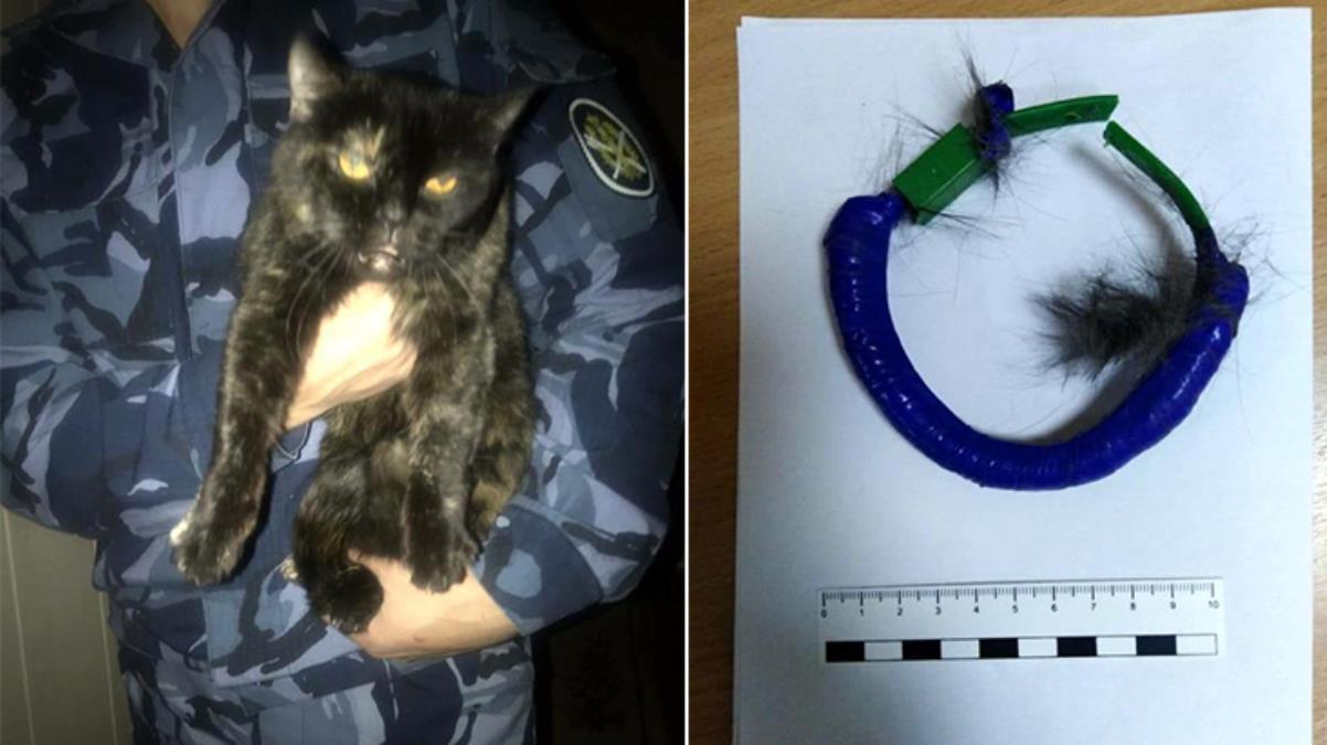 Rusya'da hapishane içinde uyuşturucu taşıyan kedi suçüstü yakalandı