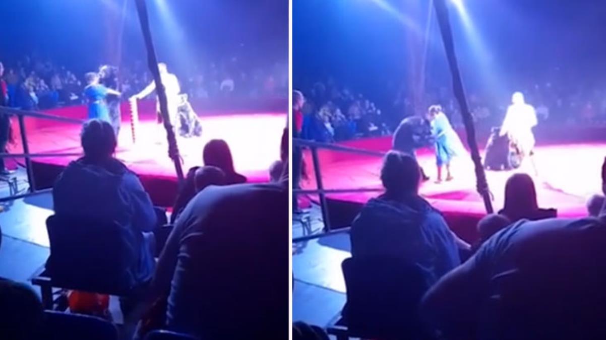 Seyirciler endişeyle izledi! Vahşi ayı, sirkte hamile eğiticisine saldırdı