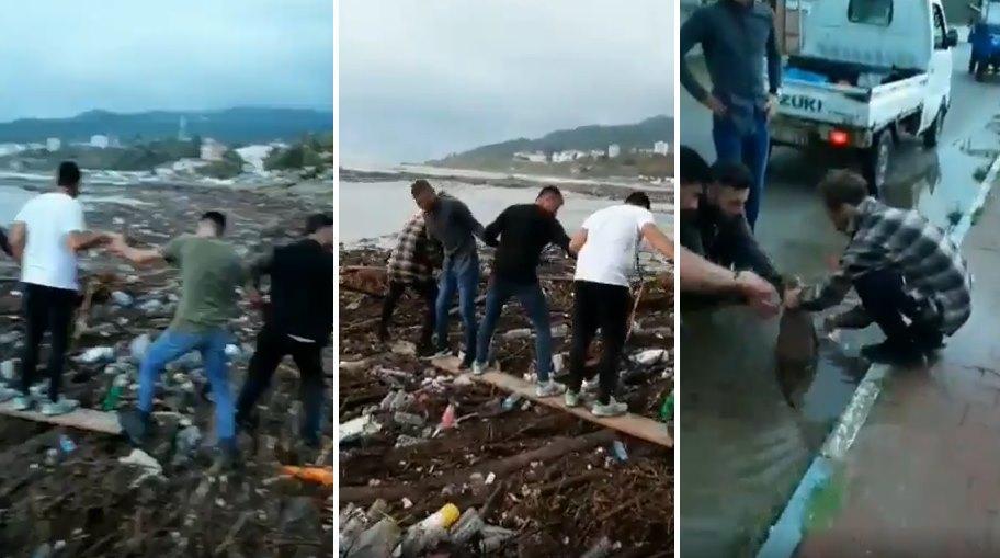 Sinop'ta Selde Denizde Mahsur Kalan Köpeği İnsan Zinciri ile Kurtaran Güzel İnsanlar