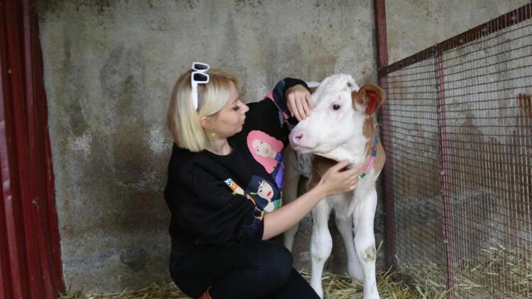 Spikerliği Bırakıp Çiftlik Kurdu: 'İnsanlarla Uğraşmaktansa Hayvanlarla Uğraşmak Daha İyi'