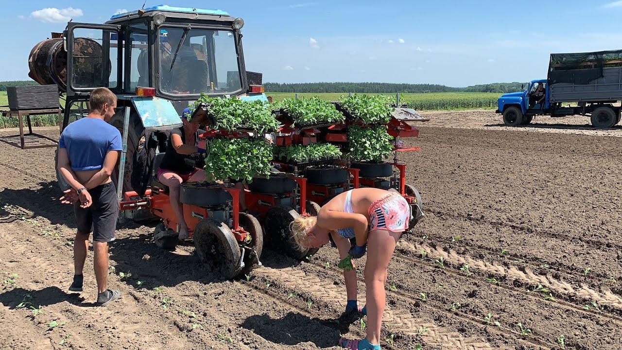 Tarlada Çalışan Ukraynalı Çiftçi Kadınların Gündem Olan Görüntüleri