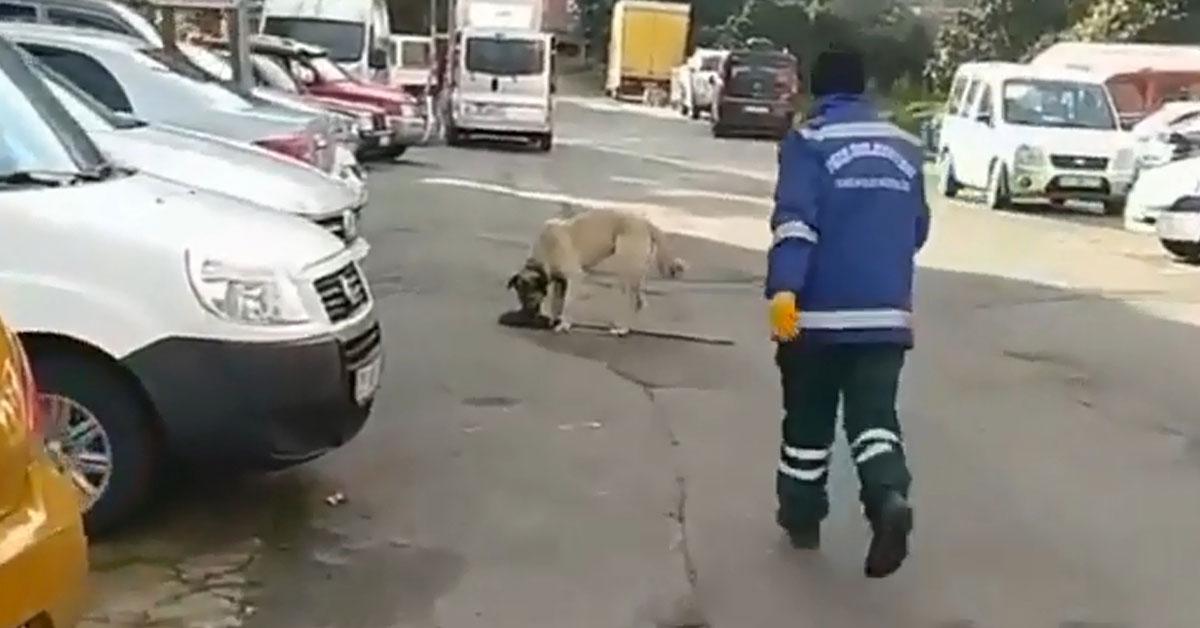 Temizlik Görevlisi, Süpürgesini Kaçıran Sokak Köpeğini 'O Bana Zimmetli' Diyerek Kovaladı