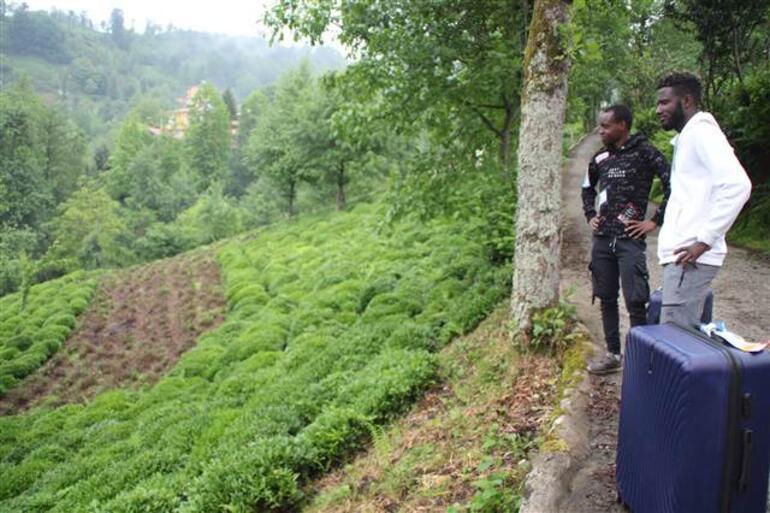 Türkiye'ye Futbolcu Olmak İçin Gelmişlerdi: Afrikalı İşçiler Çay Hasadı İçin Rize'de