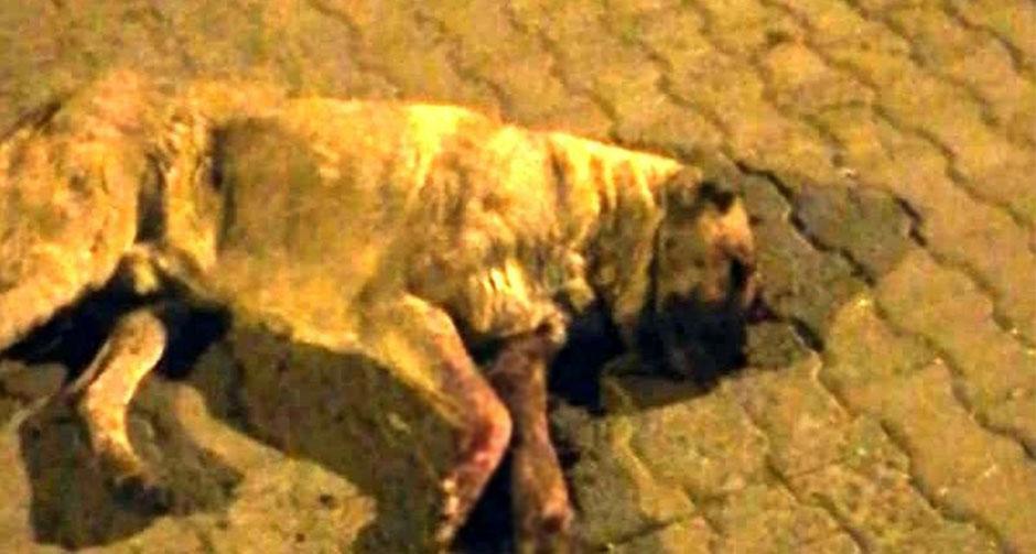 Vahşet Bitmiyor! Mersin'de Bir Köpek Gözleri Oyulmuş ve Sopayla Dövülmüş Halde Bulundu...